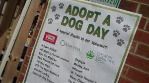 adopt-a-dog-poster-300x168
